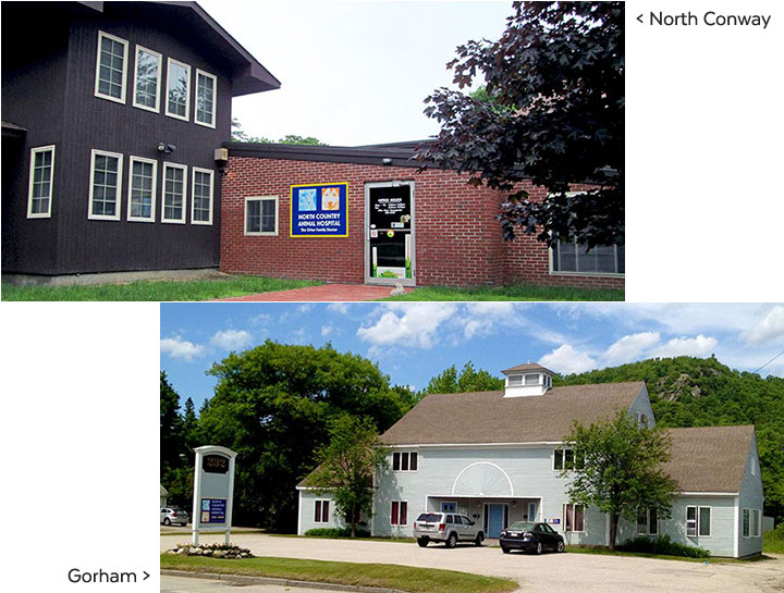 North Country Animal Hospital North Conway Veterinary Hospital